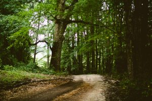 approach to counselling & psychotherapy - a journey to wholeness