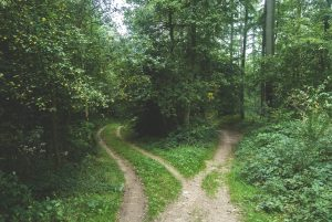 psychotherapist counsellor guidance through woods